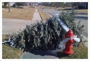Victorville Residents: Christmas Curbside Tree Collection Available through January 7th, 2011.