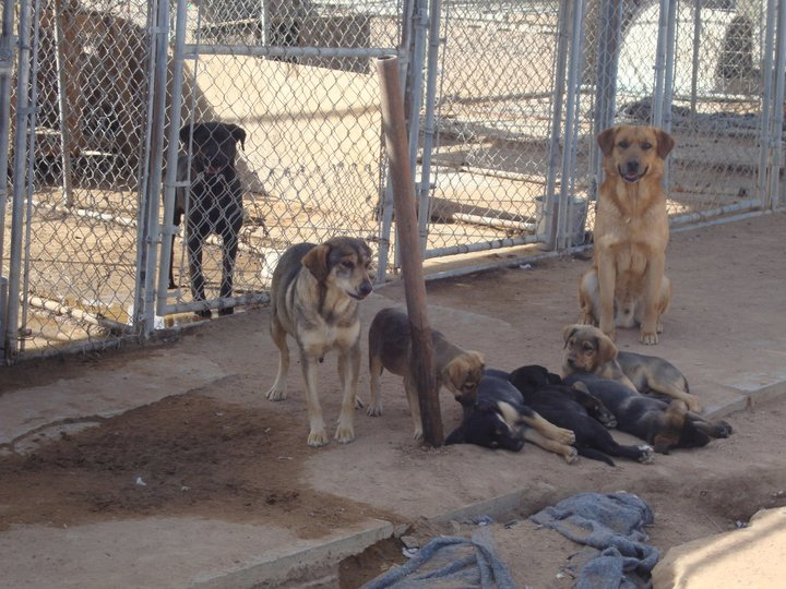 Update 10:00 AM:Community Alert: Lucern Valley Dog Shelter Is In Desperate Need To Remedy Inhumane Conditions.