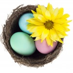 yellow gerbera daisy and colorful easter eggs
