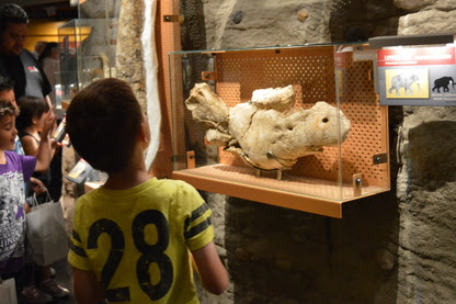 An exhibit guest looks at preserved bones of a prehistoric species.