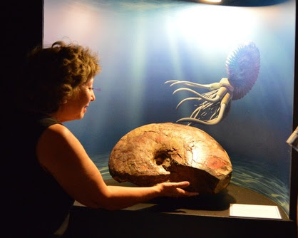 Supervisor Gonzales admires an ancient fossil in the exhibit.