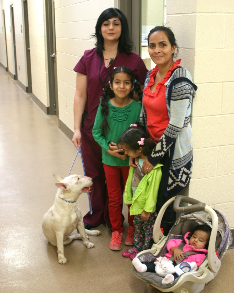 Animal Services Assistant Brandie Iraburo (left) reunites Apple Valley resident Yuleni Olea (back row, right) and her three children with her bull terrier, Blanca, who had been stolen nearly three years ago.