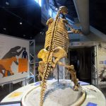 SBCM-Ice-Age-ground-sloth-768x1024